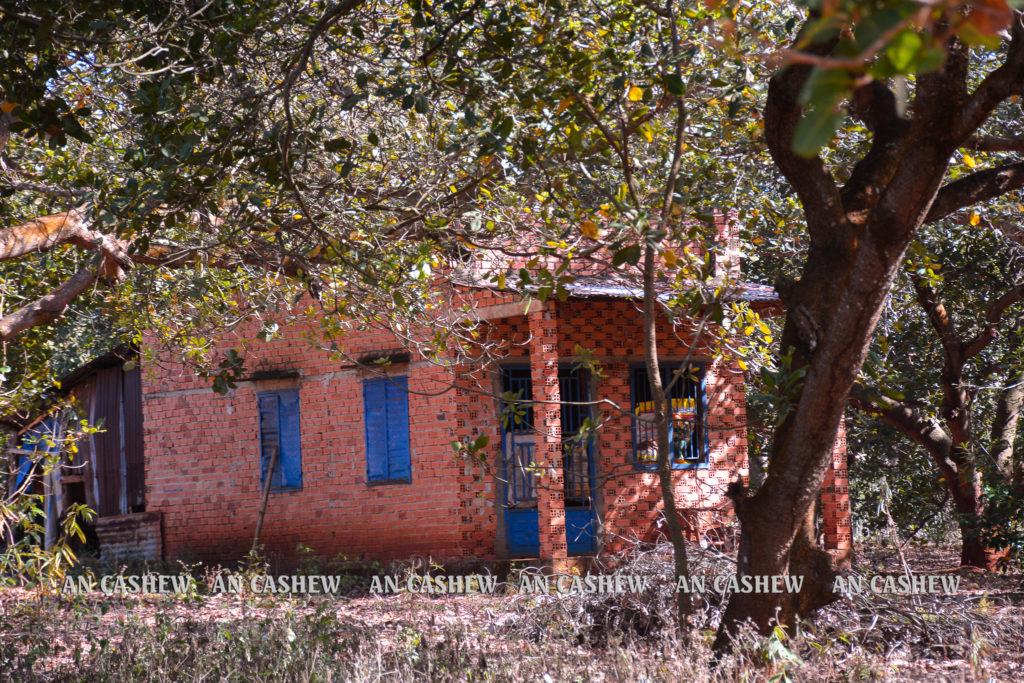 Một ngôi nhà giữa vườn điều Bình Phước