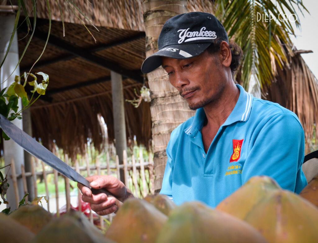 Dừa trên Cồn Chim rất ngọt và thơm
